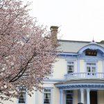 豊平館周辺は今年も桜の季節となりました
