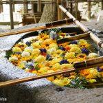 【2021札幌】盛夏の花手水巡り!今年は全19社!全て巡ってきました。